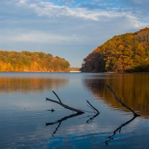 Indiana Lake with Sticks in Water