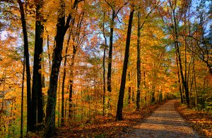 Footpath in the forest at autumn sunset